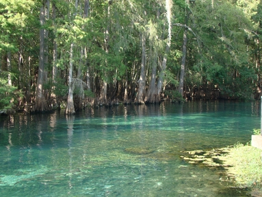 Florida State Parks, Reservations, Florida Adventure, Manatees, Florida Springs