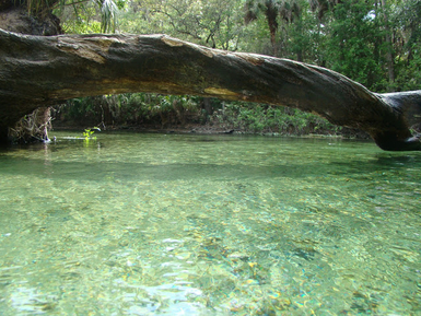 Florida Springs, Tropical camping, Blue Springs State Park,
