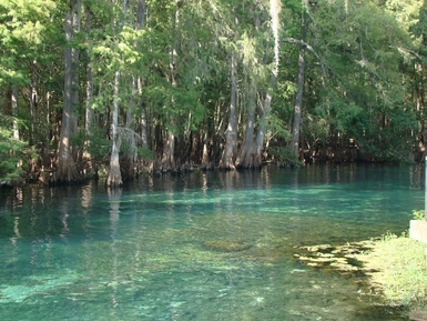 Florida State Parks, Manatees, Springs, Camping