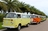 Fleet of VW Busses in front of Royal Palm Trees